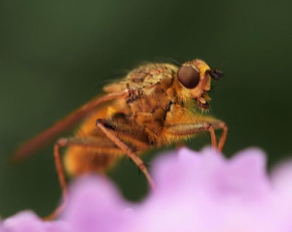 Fly1 (2)