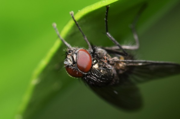 up side down fly 1