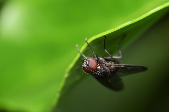 upside down fly
