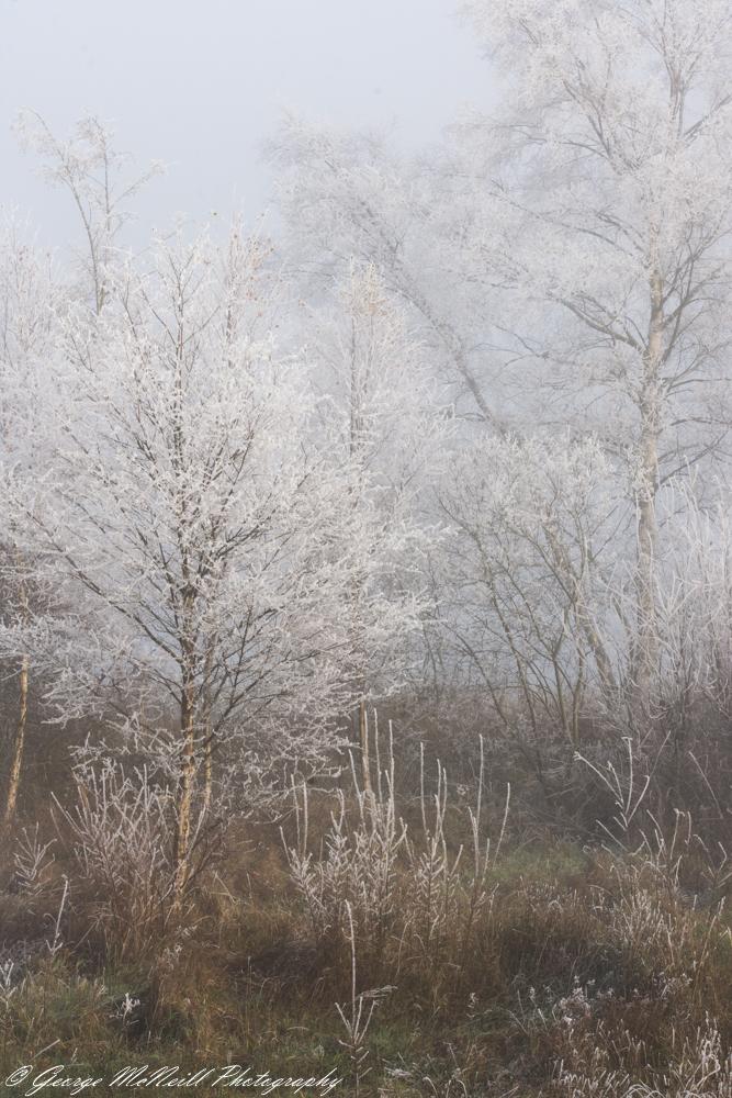 trees.ice a1.JPG