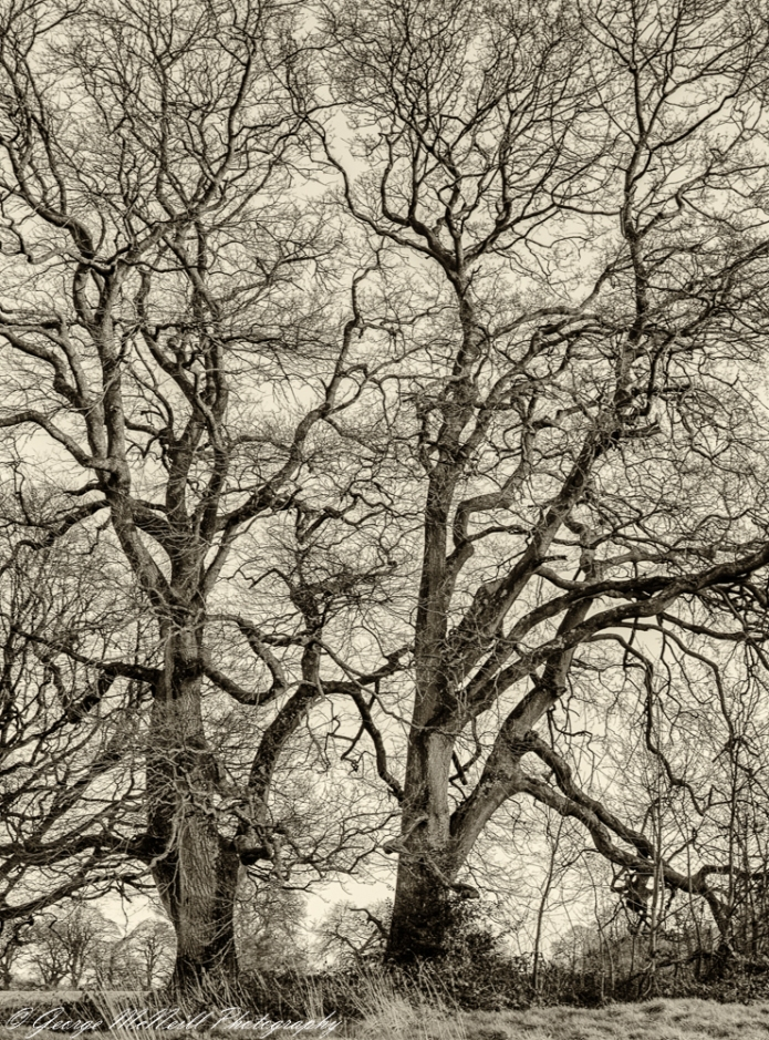 Mucko  trees1.JPG