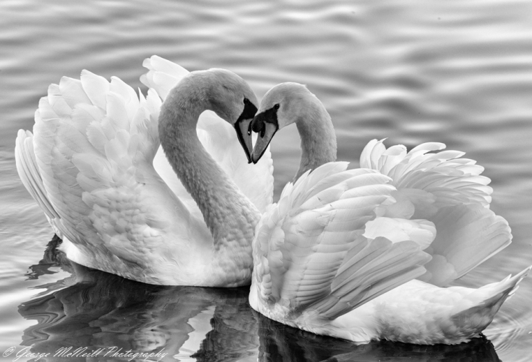lovers high key.JPG