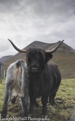 Scotland-144.jpg