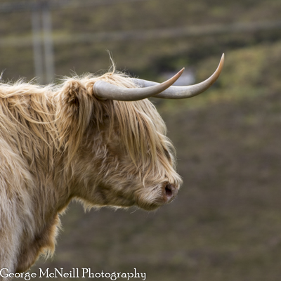 Scotland-146.jpg