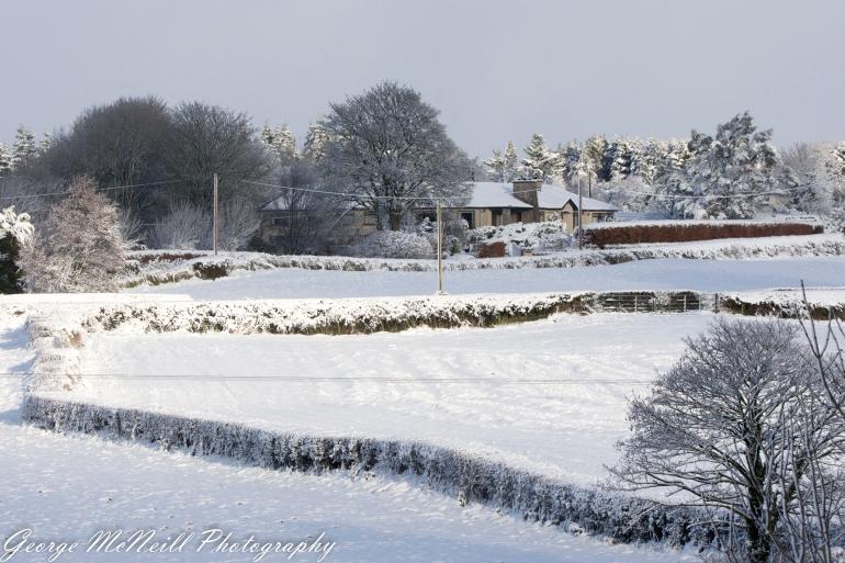 snow-1715.jpg