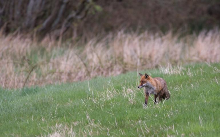 fox-3309.jpg
