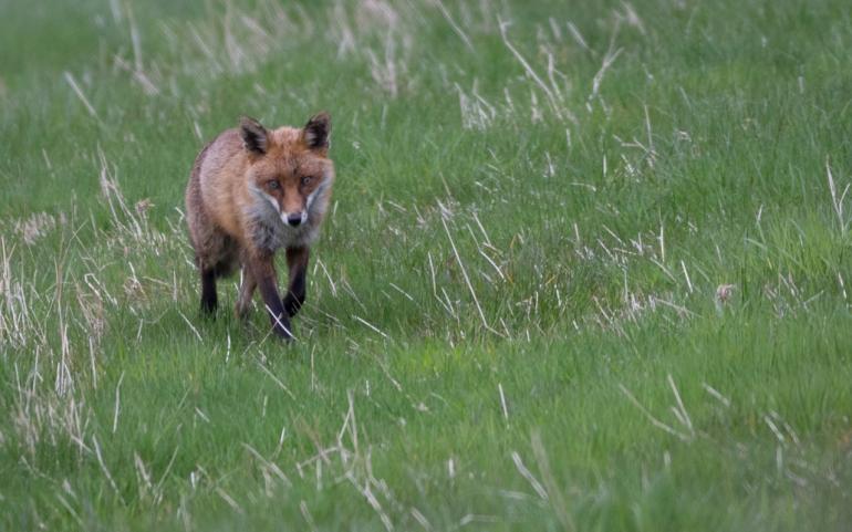 fox-3318.jpg