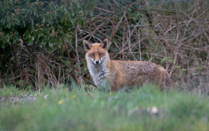 fox-3335.jpg