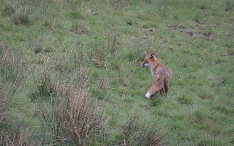 fox-3347.jpg