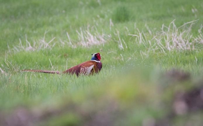 fox-3354.jpg