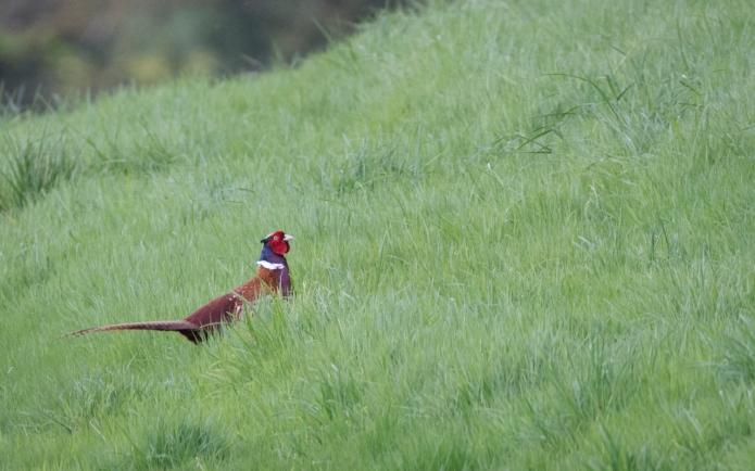 fox-3371-2.jpg