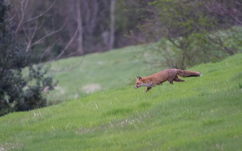 fox-3379.jpg