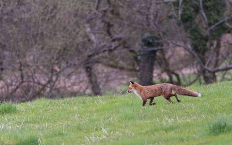 fox-3385.jpg