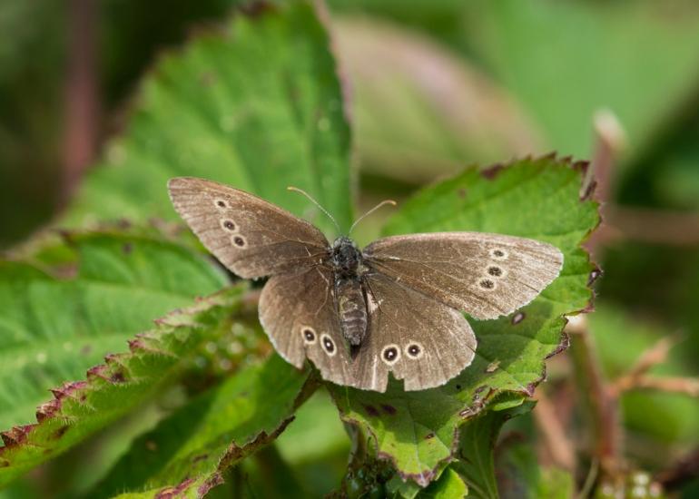 Bee.butterfly-4627.jpg