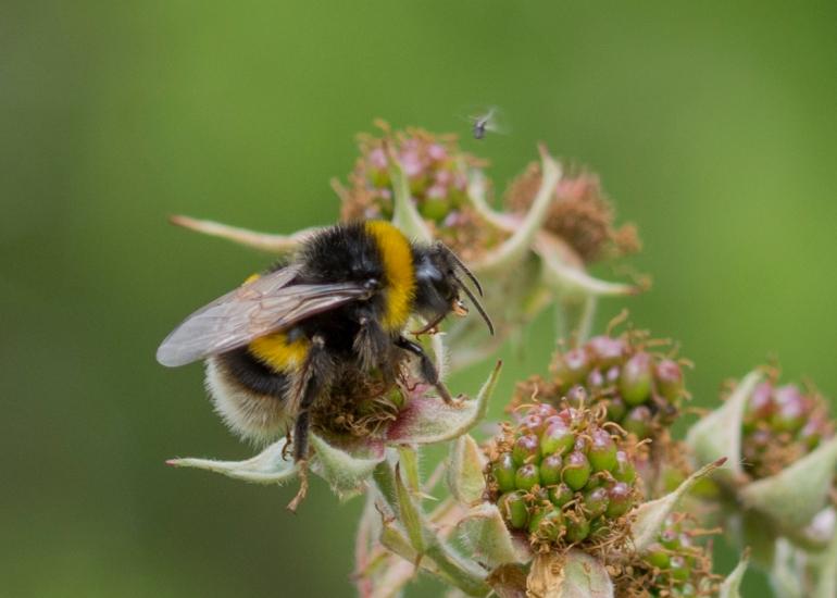 Bee.butterfly-4660.jpg