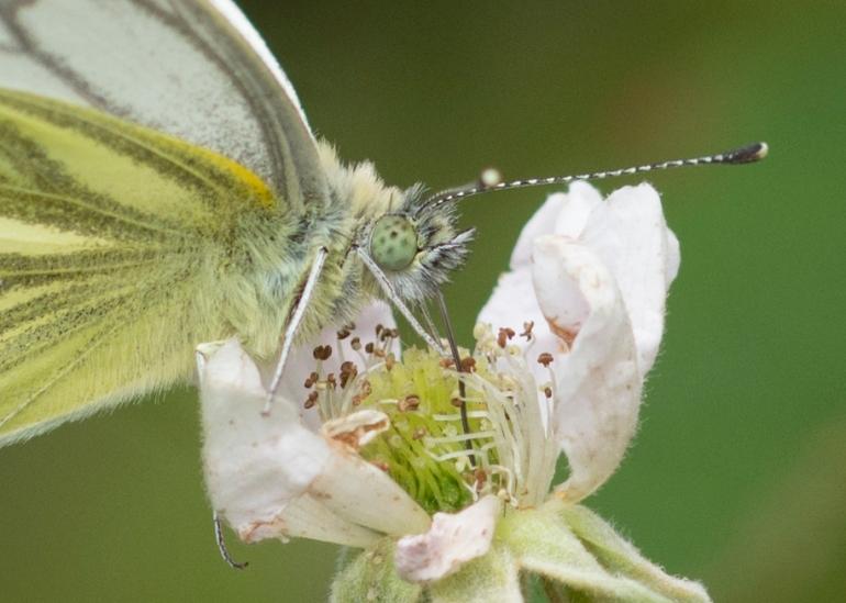 Bee.butterfly-4669-2.jpg