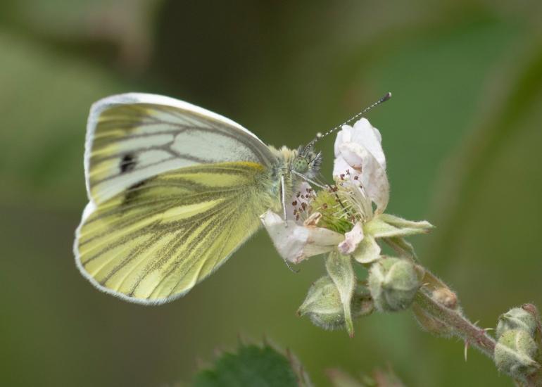 Bee.butterfly-4669-3.jpg