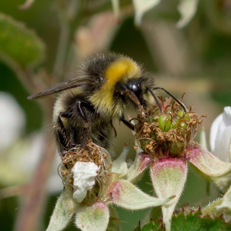 Bee.butterfly-4701.jpg