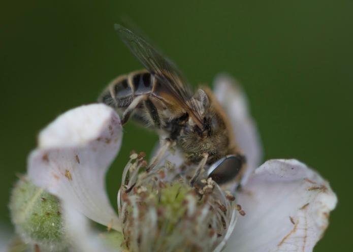 Bee.butterfly-4804.jpg