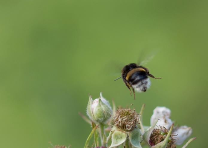 Bee.butterfly-4917.jpg