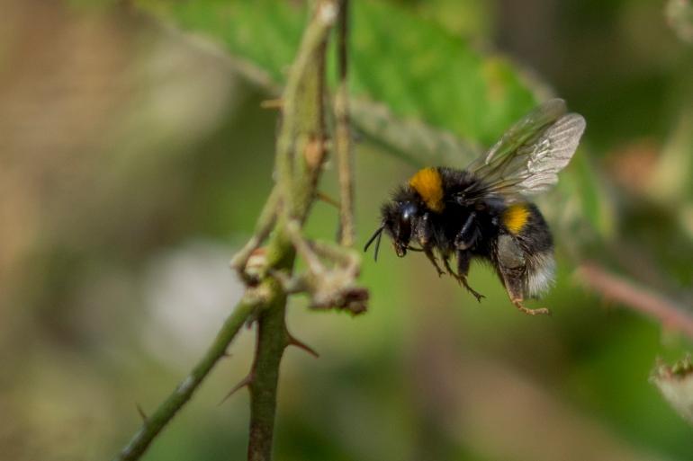 Bee.butterfly-4962-2.jpg