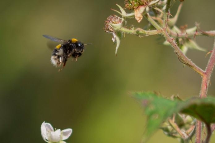 Bee.butterfly-4970.jpg