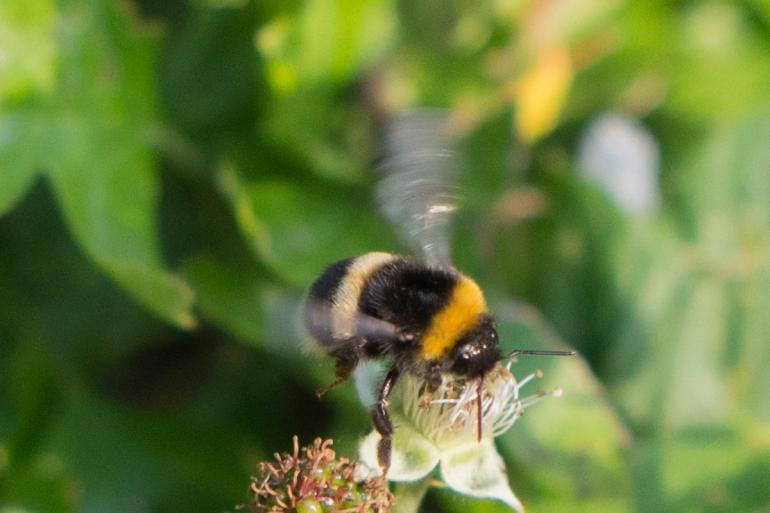 Bee.butterfly-5282.jpg