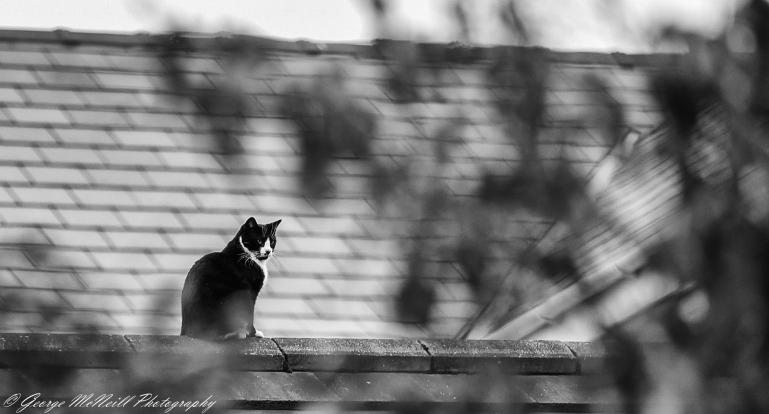 cat2-
